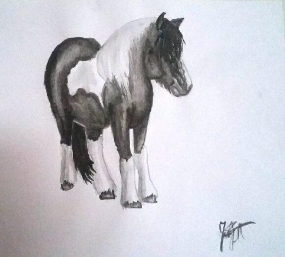 pony-draw