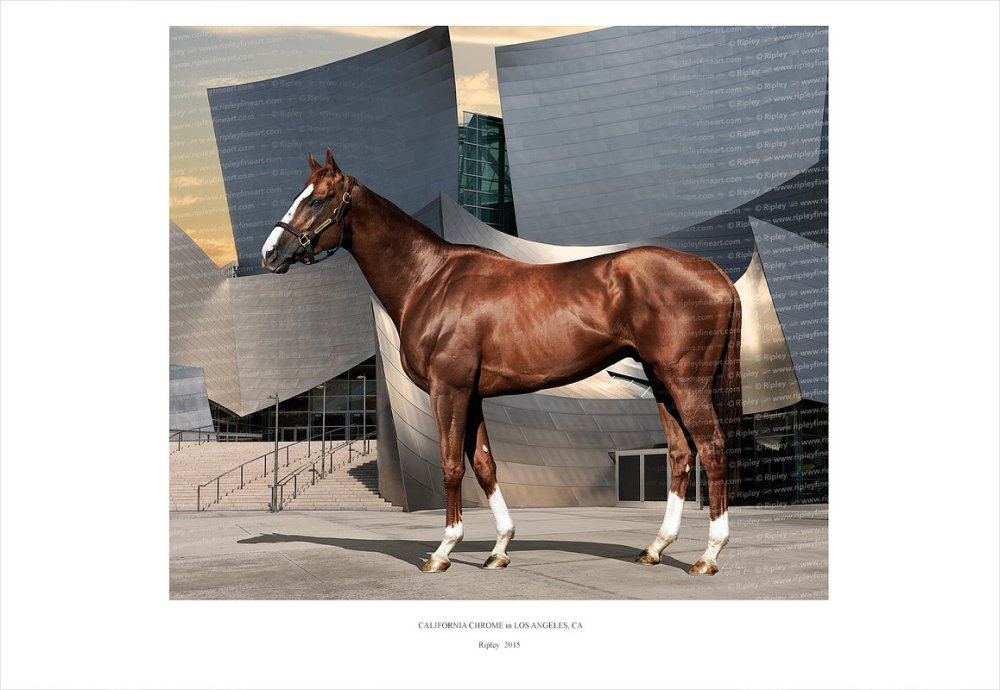 california_chrome01_website_image_thug_wxga.jpg