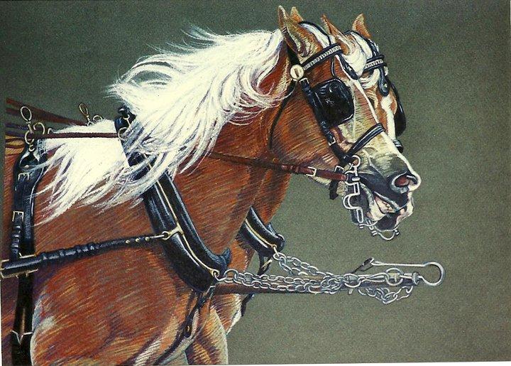 whoa-ponies