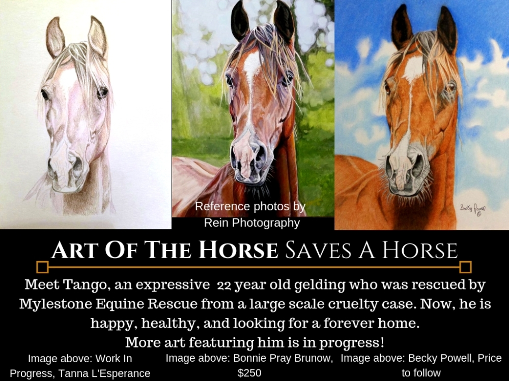 Art Of The Horse Saves A Horse TANGO